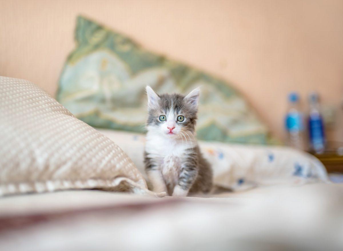 Få en god tid med din nye kattekilling